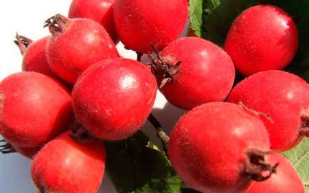 Плоды китайского боярышника